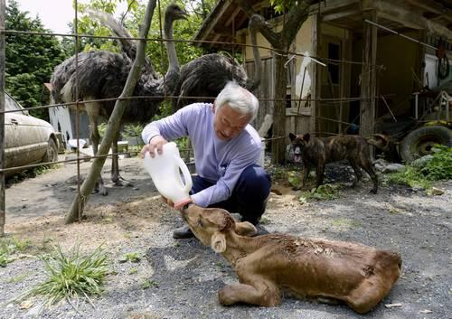 Matsumura Naoto, o guardião dos animais de Fukushima