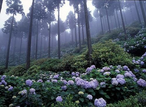 ichinoseki ichinoseki Michinoku Jardim das Hortênsias
