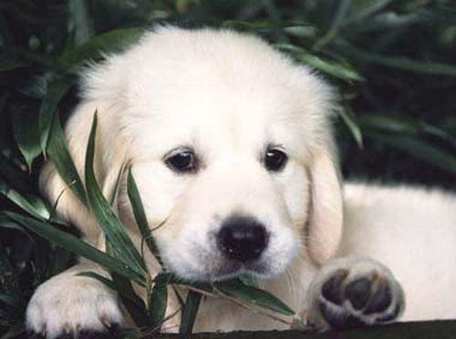 Momoko, o cão que recolheu lixo por 14 anos