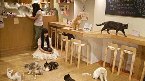 Pet cafes no Japão