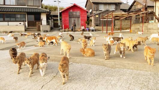 Aoshima, a Ilha dos Gatos