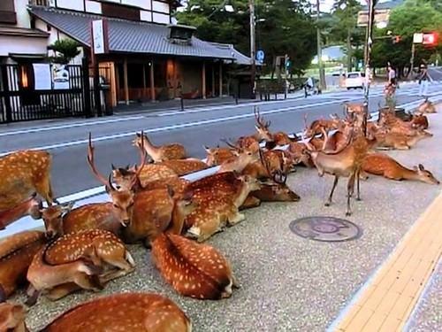 Nara, o doce lar dos cervos