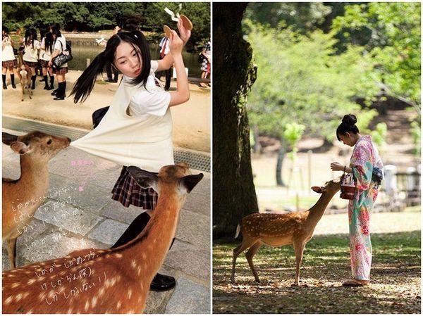 Os cervos de Nara