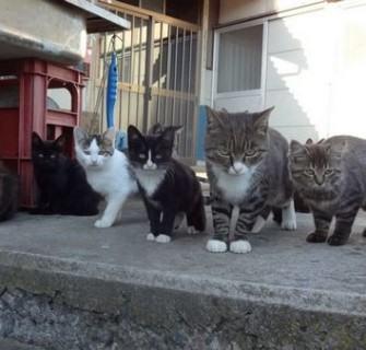 Gatos na Ilha Aoshima
