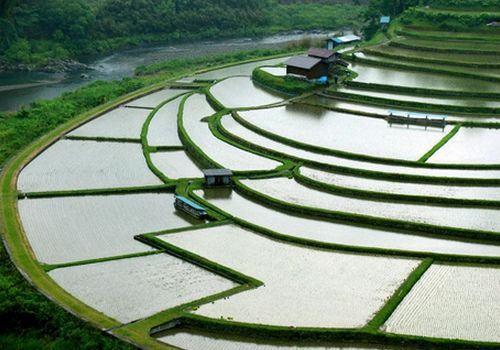 Terraços de Plantações de Arroz em Aragi Island, Wakayama Ken