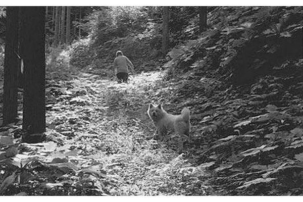 Morie Sawataishi nas montanhas no norte de Honshu com um de seus akitas