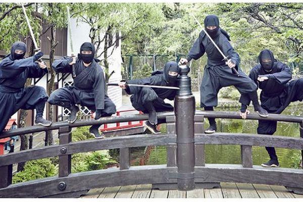 experiência ninja