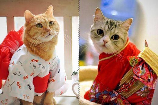cat-kimono