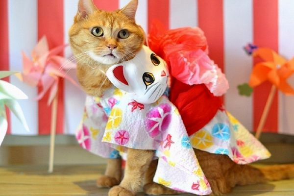 gatos de quimono