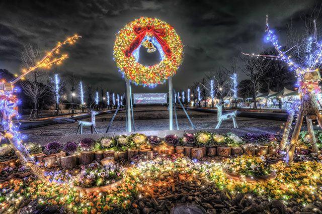 Iluminações de Natal - Winter Vista Illumination - Showa Kinen Koen
