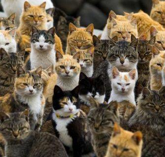Conheça 11 Ilhas dos Gatos no Japão
