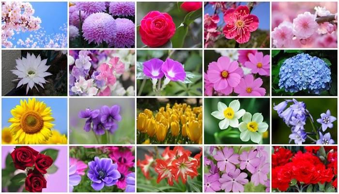 Hanakotoba - A linguagem das flores no Japão