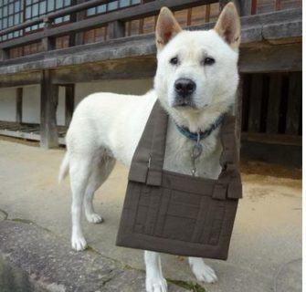 Maru, o cão sacerdote do Japão
