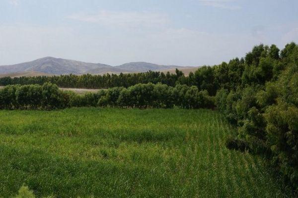 deserto de gamberi, Nangarhar