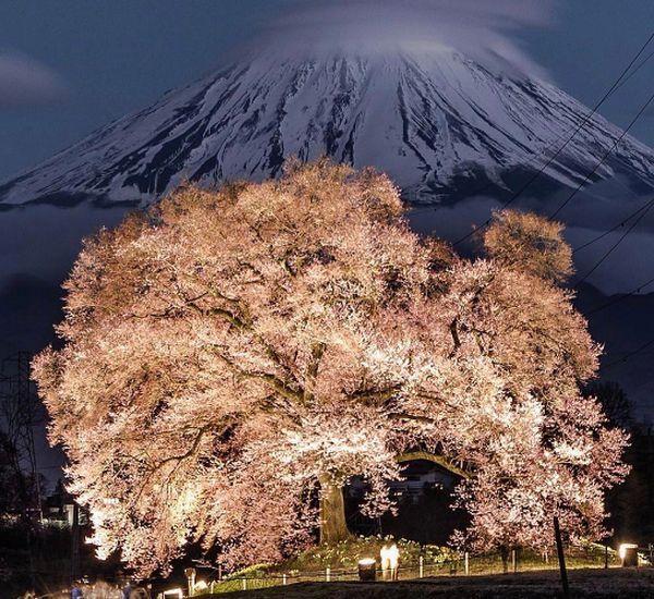 Essas flores de cerejeira tiradas por fotógrafos amadores são simplesmente extraordinárias 14