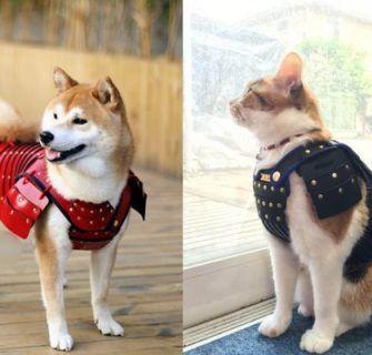 Empresa japonesa cria armadura de samurai para cães e gatos