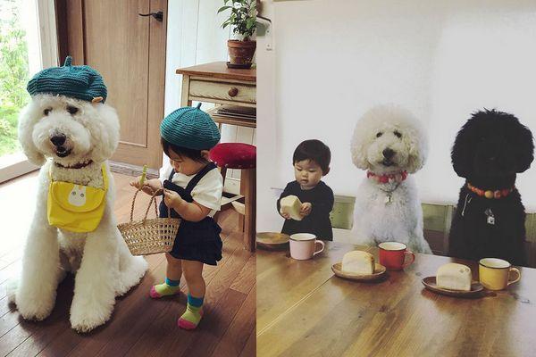 Essa garotinha japonesa com seus poodles gigantes vai ser a coisa mais fofa que você vai ver hoje 1