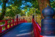 Conheça a história por trás dessas cinco palavras japonesas