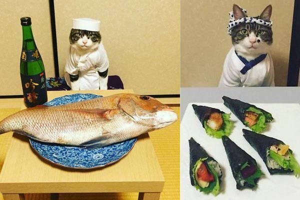 Maro, o gato cosplay