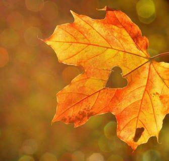 10 Canções Japonesas Que Falam Sobre o Outono