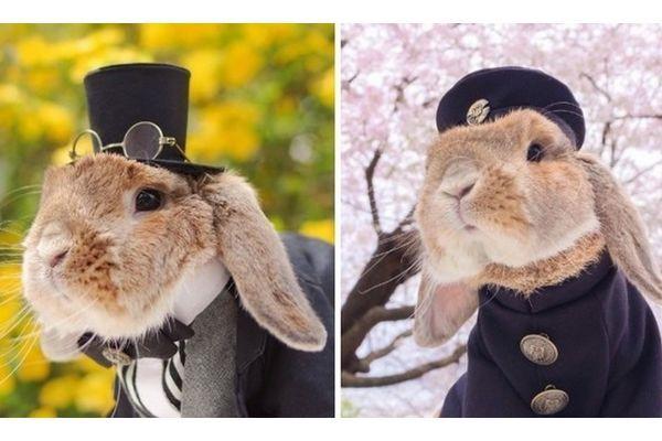Pui Pui, o Coelho mais Fofo do Japão