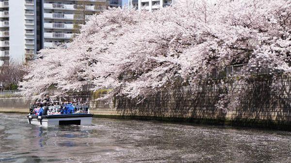 Hanaikada Megurogawa-cruise