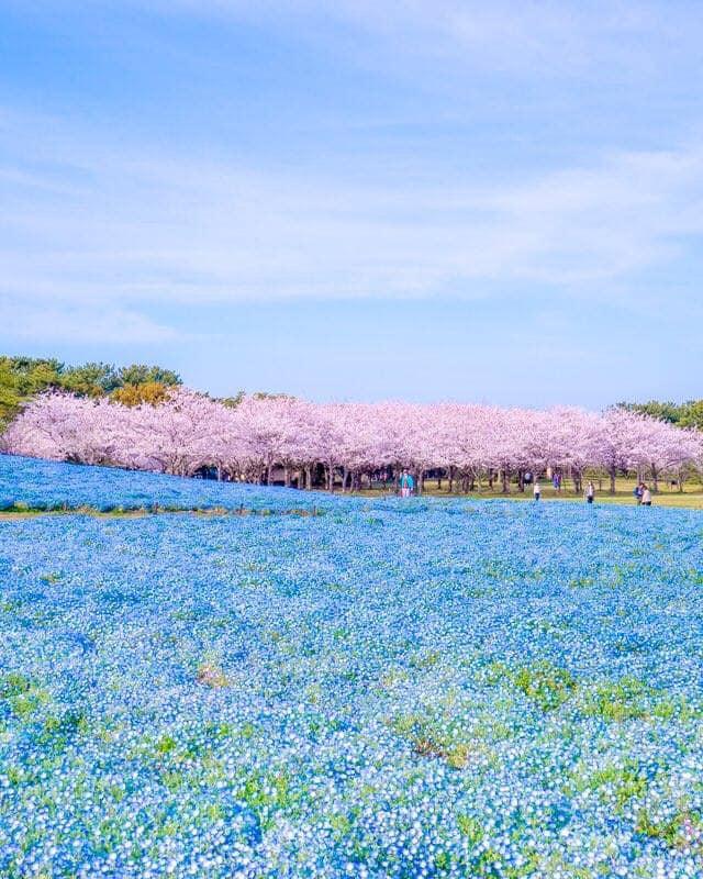Uminonakamichi Seaside Park , Fukuoka 1