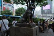 6 lugares relacionados ao famoso cão leal do Japão