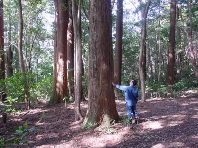 Experimento feito há 50 anos é o responsável por esses círculos misteriosos em uma floresta no Japão 2