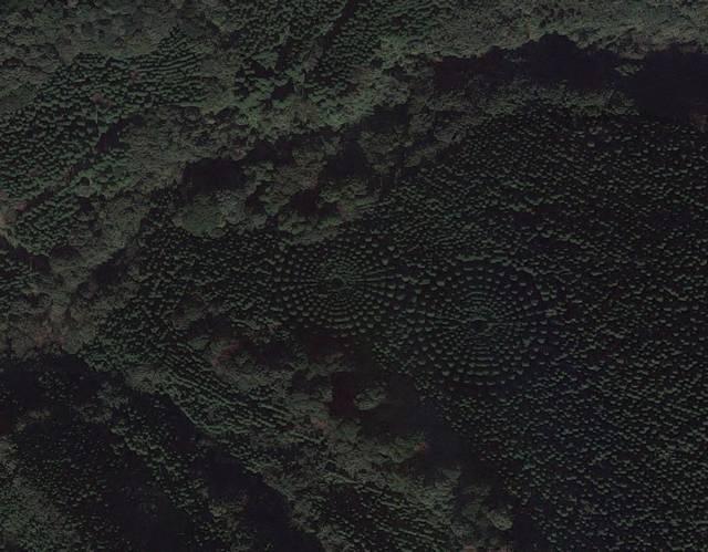Experimento feito há 50 anos é o responsável por esses círculos misteriosos em uma floresta no Japão 3