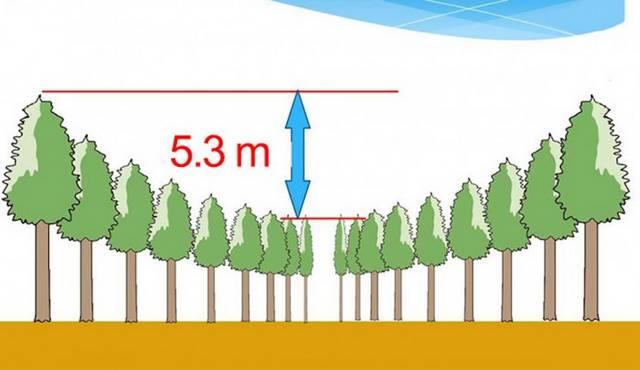 Experimento feito há 50 anos é o responsável por esses círculos misteriosos em uma floresta no Japão
