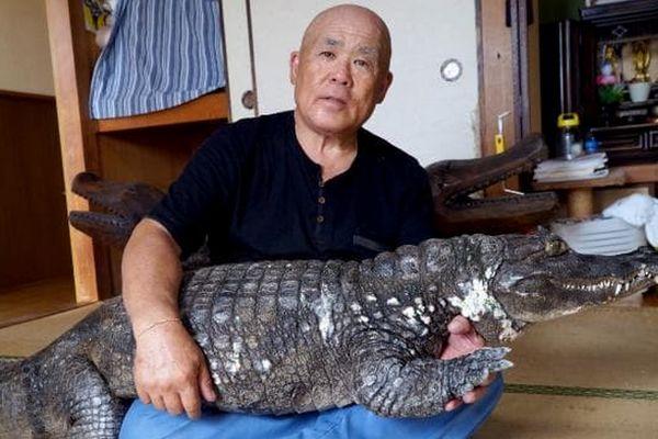 Conheça o japonês que cria um jacaré como animal de estimação há quase 4 décadas