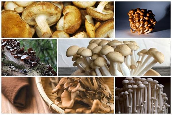 7 tipos de cogumelos japoneses e seus benefícios para a saúde