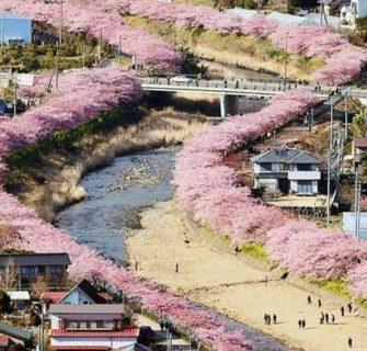 As flores de cerejeira acabaram de florescer nesta cidade japonesa e as fotos são mágicas