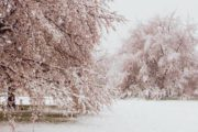 Em plena primavera, uma rara visão da neve e das flores de cerejeira em Tóquio