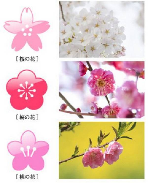 Sakura (acima), ameixa (centro) e pêssego (embaixo)